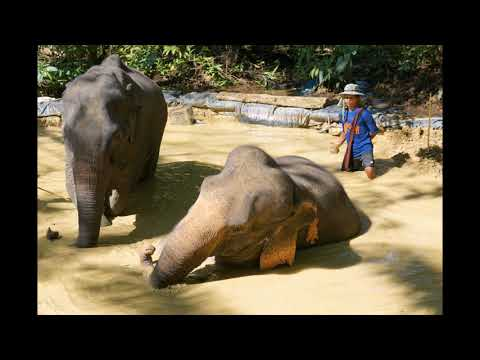 KHAO SOK LAKE ELEPHANT EXPERIENCE Photos by Vadym&Nat sound by mahoroba photo in my mind