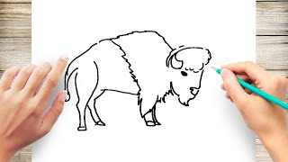 How to Draw Bison Step by Step Easy for Kids