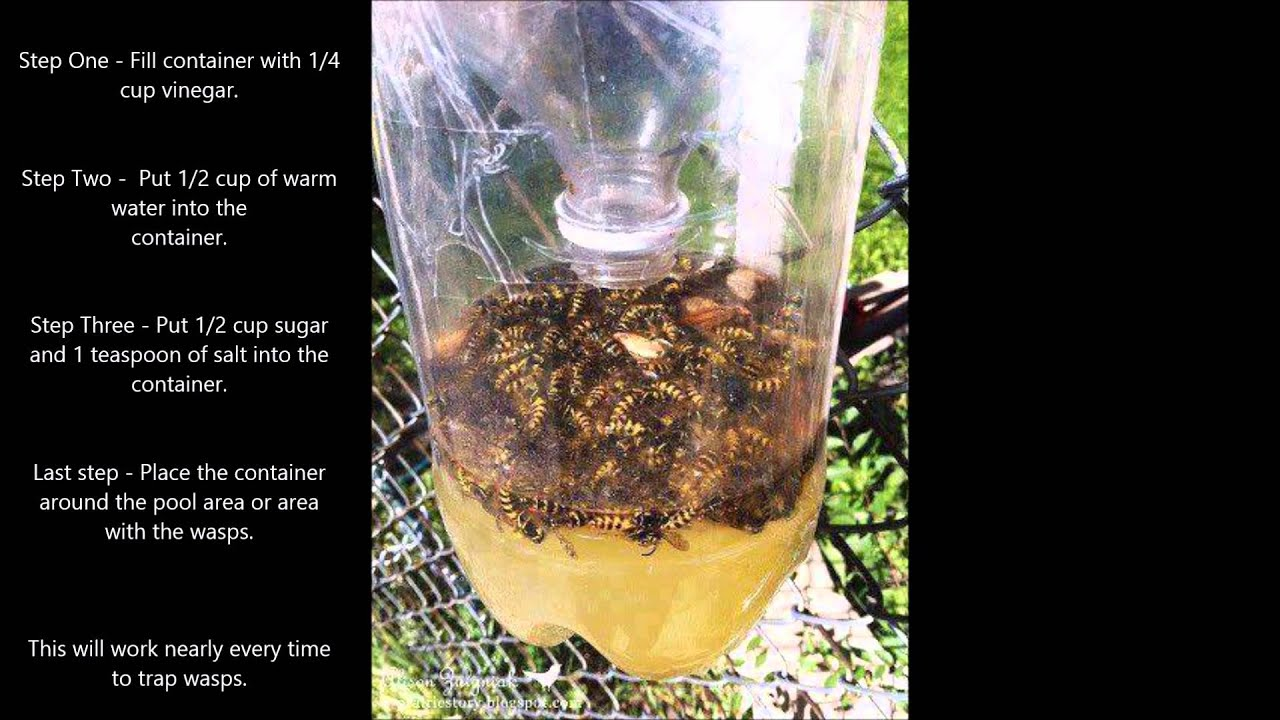 How to get rid of the wasp nest 61
