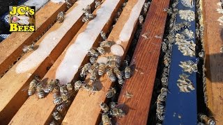 Feeding honeybees dry sugar during winter
