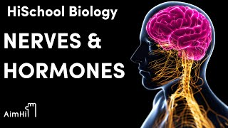 Hormones and Nerves: Wrap up // HiSchool Biology with Josh Wick