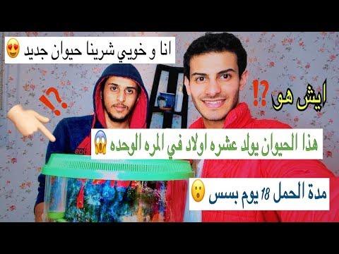 شريت حيوان جديد 😍 فترة حمله 18 يوم بس 😱 و يولد اكثر من 10 اطفال في المره الوحده 😮   Mohamed Vlog