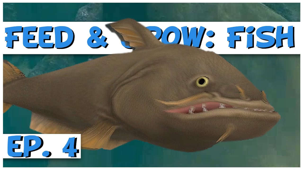 Feed and grow fish ep 4 level 50 giant catfish for Fed and grow fish