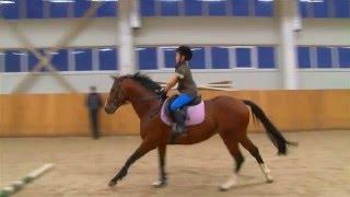 Тренировка в конном спорте