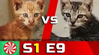 Funny Cat Videos for Kids | S1-EP9 | Ninja Cats 1 || Capture Candy Kids TV