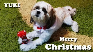 Puppy opens Christmas gifts | Puppy Christmas Surprise | Shih tzu Christmas gifts | Yuki