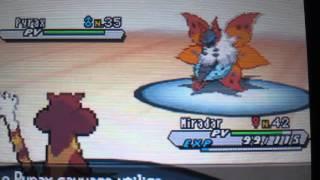 Comment  capturer Pyrax sur pokemon version blanche 2