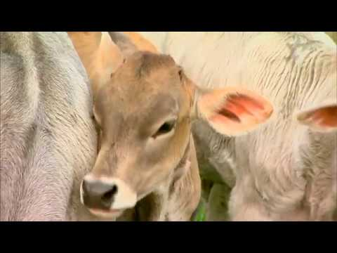 Dairy Farming in Wisconsin - It's About the Cows