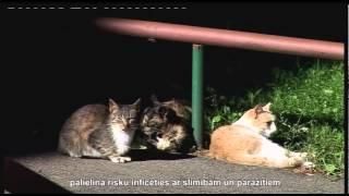 Video, Стерилизация бродячих животных