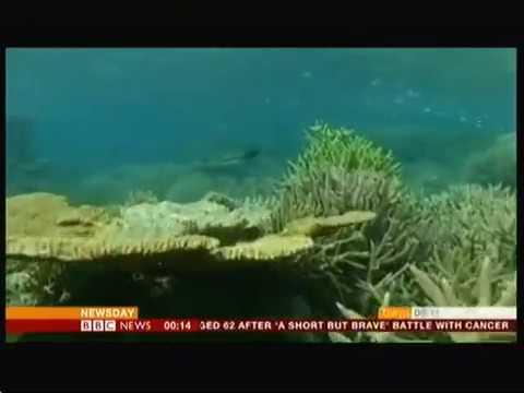 Great Barrier Reef - sad state (Australia) - BBC News - 21st April 2016