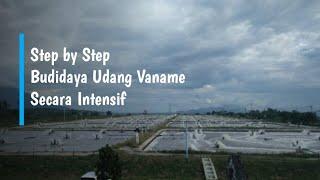 Step by Step Budidaya Udang Vaname secara Intensif