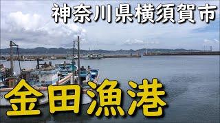 神奈川釣り場 三浦 金田漁港 PELABUHAN KANEDA MIURA KANAGAWA JEPANG