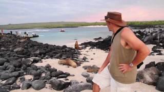 Sea Lions at Galapagos Islands