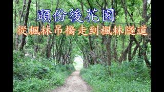 20180406頭份後花園(從楓林吊橋走到楓林隧道)(賞桐秘境)