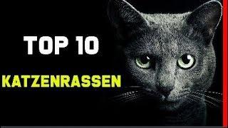 Top 10 Beliebtesten Katzenrassen | Die Schönsten Katzen