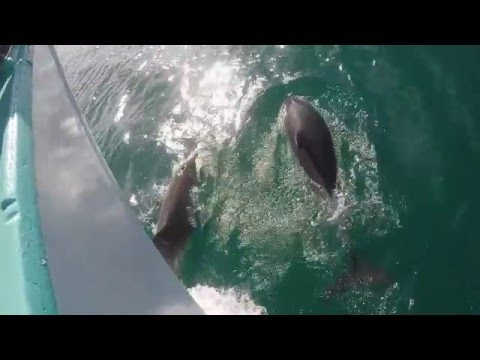 Dolphin & seal swim with Polperro Tours, Melbourne