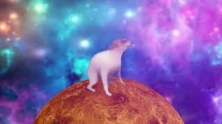 Dancing Dog  Shooting Stars (1 Hour Version)