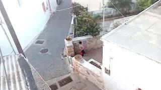 Приколы. Бабка и мушмула на Крите