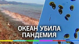 В гибели океана у Камчатки виновата пандемия у водорослей. Кто такие динофлагелляты?