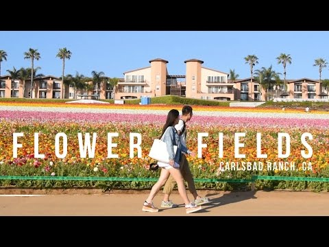 Colorful Spring Flower Fields | CARLSBAD RANCH