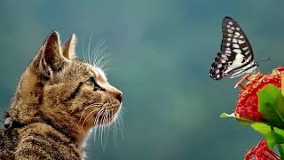 みゆはん - 化け猫ワルツ