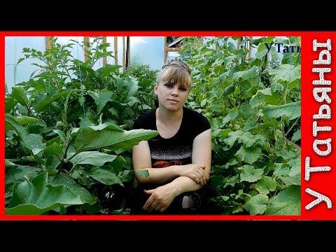 БАКЛАЖАНЫ! ХИТРОСТИ и ТОНКОСТИ выращивания баклажанов, рассады, болезни и вредители.