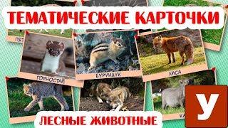 """Карточки для детей """"Лесные животные"""" Учим новые слова"""