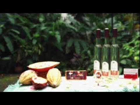 Technology Commercialization for Cacao and Demo sa Paggawa ng Cacao Wine