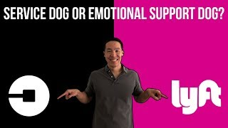 Service Animals vs Emotional Support Animals for Uber and Lyft