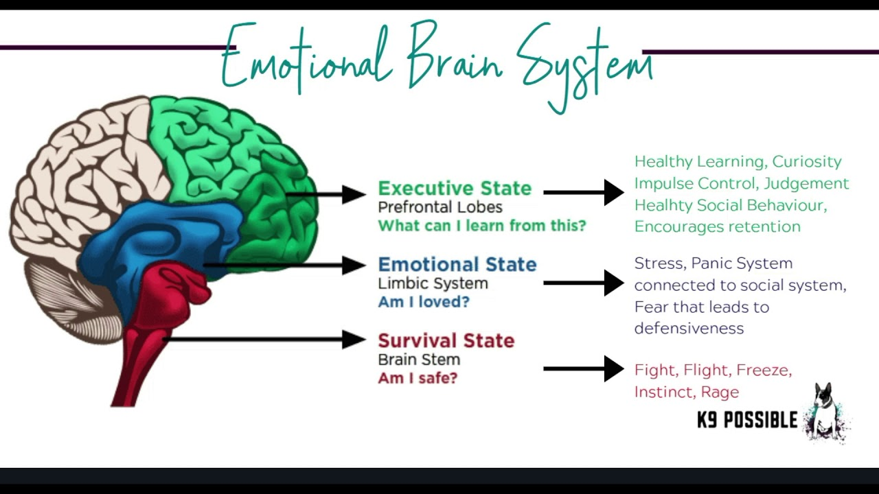 Dog Who Struggles Emotionally? Video On Essential Oils & Behavior In The Brain
