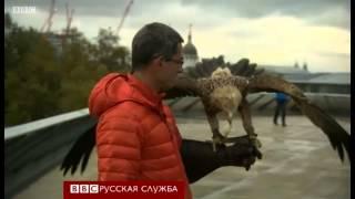 Как выглядит Лондон глазами орла