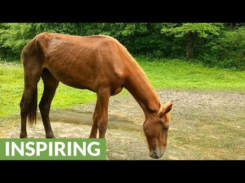 Rescuing horses from flooding and starvation