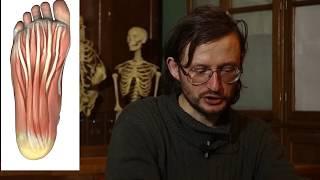Станислав Дробышевский о стопах, кистях, биологически активных точках и ягодичных мышцах
