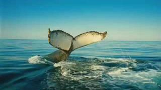 Wild Ocean - Océano Salvaje