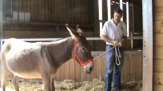 Dealing with donkey leading problems