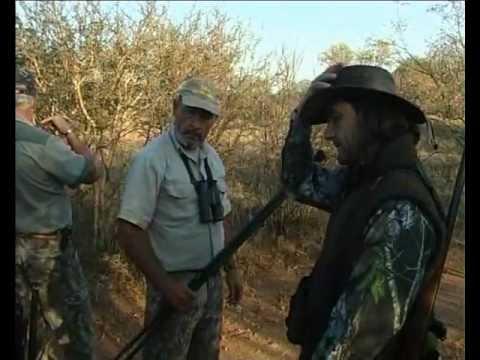 Recechos de Búfalo del Cabo y Orix del Cabo en Limpopo