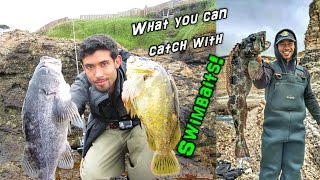 Fishing for Rockcod, Lingcod, & Cabezon with Swimbaits from Shore!