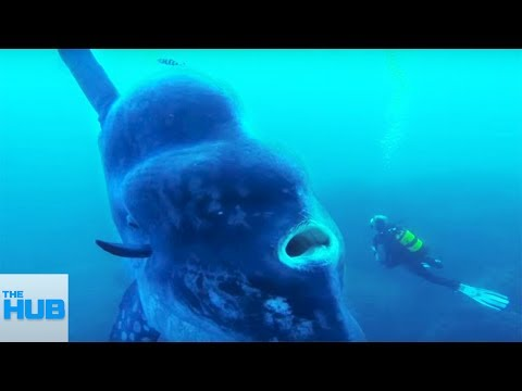 Thumbnail: MYSTERIOUS Underwater SEA CREATURES You Never Knew EXISTED