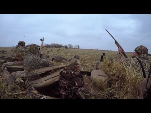 Illinois Canadian Goose Season Highlight Reel