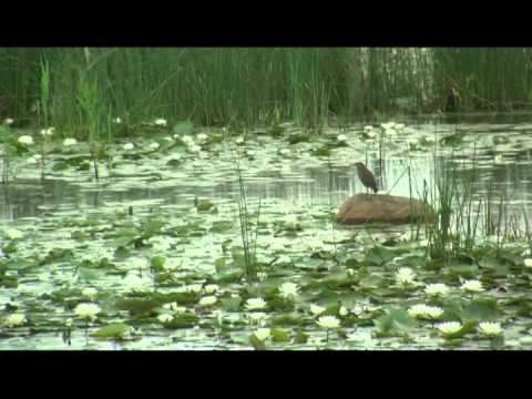 Animal Adventures -Mass Audubon, Daniel Webster Wildlife Sanctuary