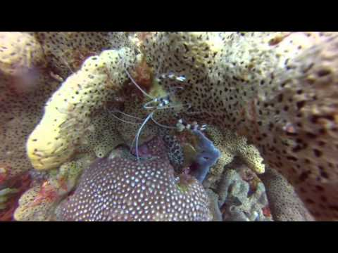 St. Lucia Diving