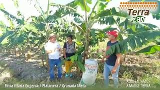 Terra Zan - Fertilizante Orgánico Mineral | Finca María Eugenia (Platanera) - Granada, Meta