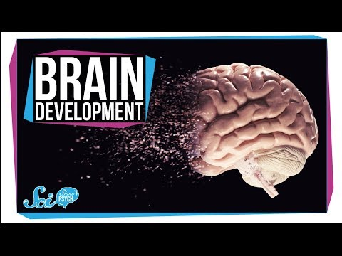 When Does Your Brain Stop Developing?