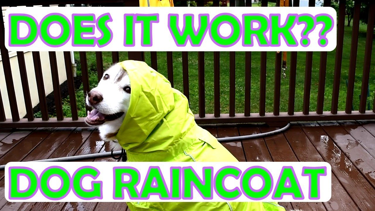Siberian Husky Wearing A Raincoat