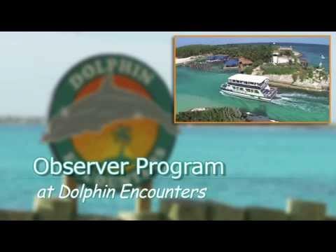 Observer Program at Dolphin Encounters