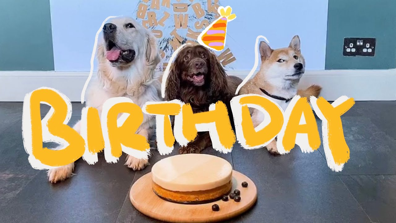 Making a Birthday Dog Cheese Cake for our Cocker Spaniel | EASY