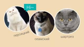 Породы котов