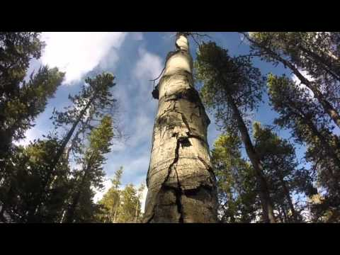 Hiking Beaver Trial at Golden Gate Canyon State Park | Golden, Colorado