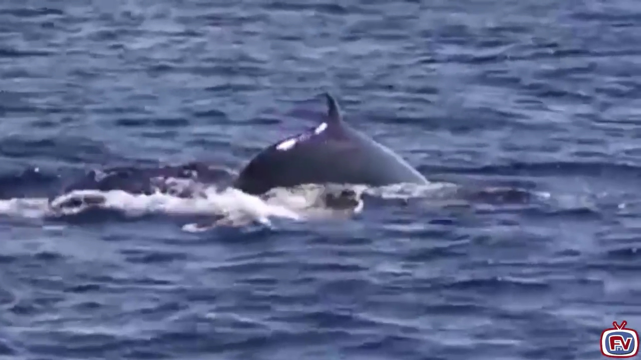 Fuerteventura Whale Watching
