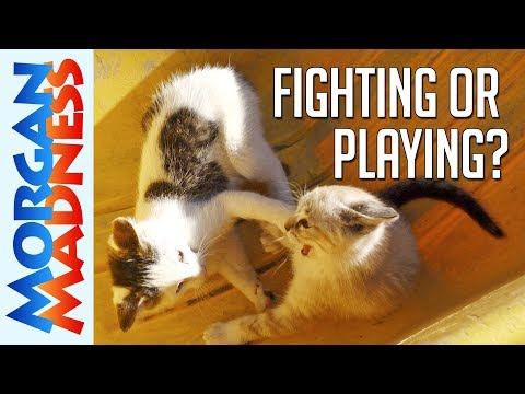 Are These Cats Fighting or Playing? | Morgan Madness